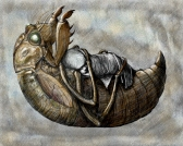 Cicada Lullaby by Linda Saboe