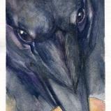 Crow with Orange Disk by Linda Saboe