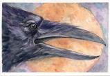Crow Shine by Linda Saboe