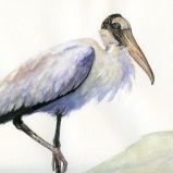 Wood Stork by Linda Saboe