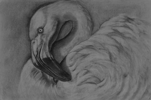 Flamingo in White by Linda Saboe