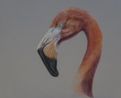 Flamingo by Linda Saboe