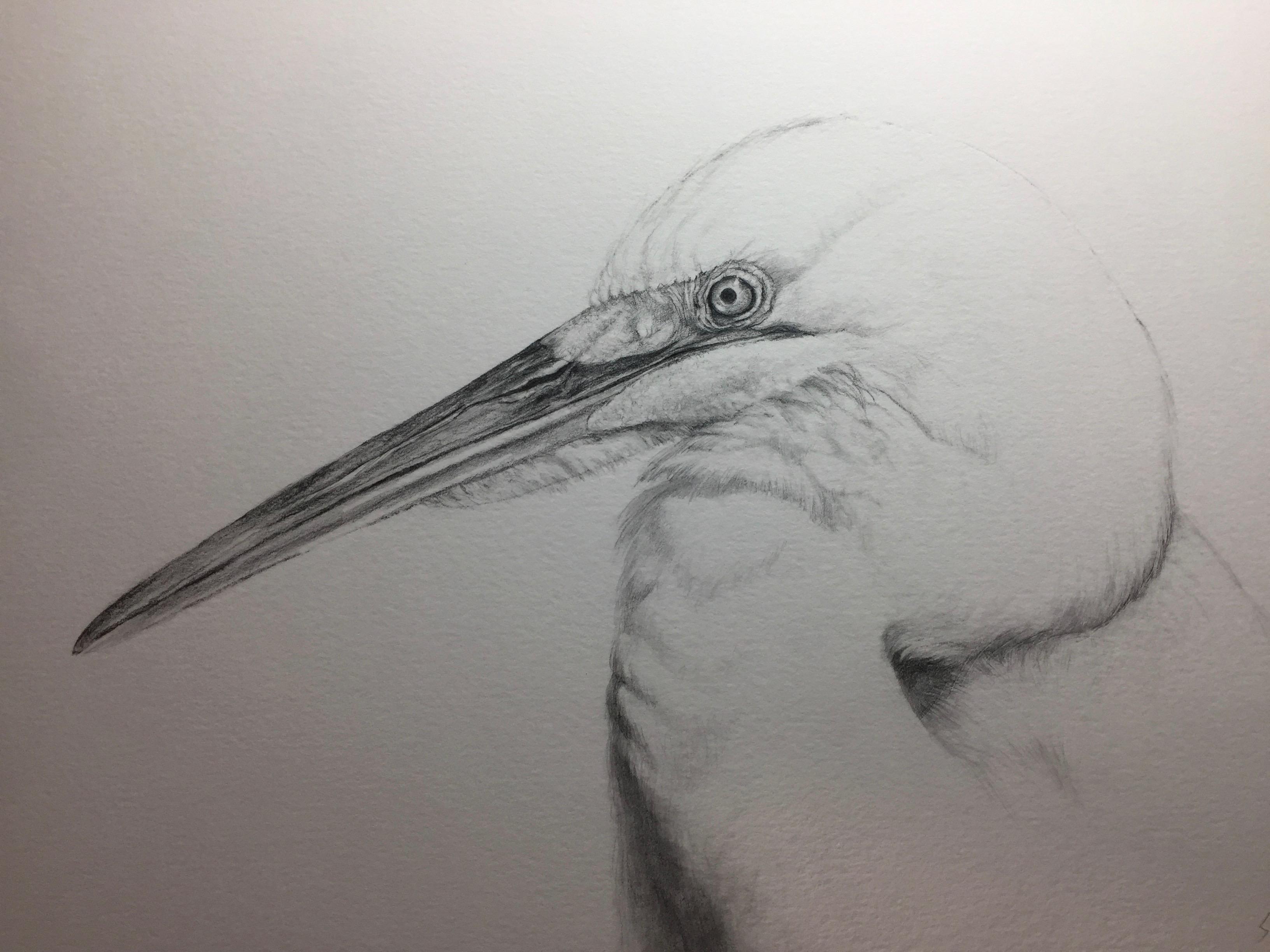 Egret by Linda Saboe