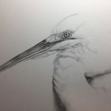 Great Egret by Linda Saboe