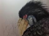 Zelda, Wreathed Hornbill
