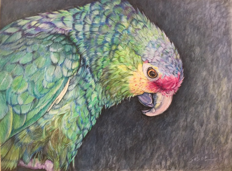 "Milo, colored pencil, 9"" x 12"""